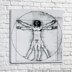 Vitruvian Man drawing by Leonardo Da Vinci