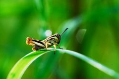 Insects_15