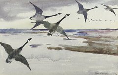 Canadian Geese, 1895