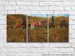 Vineyards In The Hills 005_1